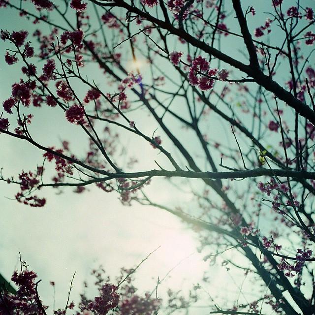 Tumblr_nm0vl9np691t7libuo1_1280