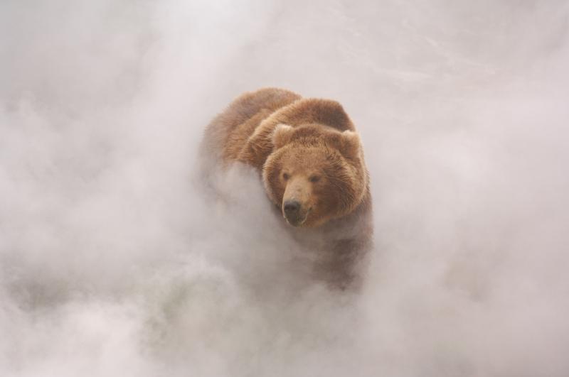 1149376-bear